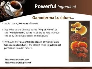 og-ganoderma-lucidum
